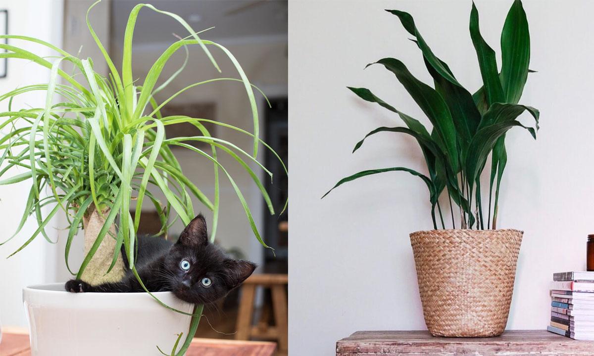 Plante D Intérieur Tendance 10 plantes d'intérieur sécuritaires pour les enfants et les