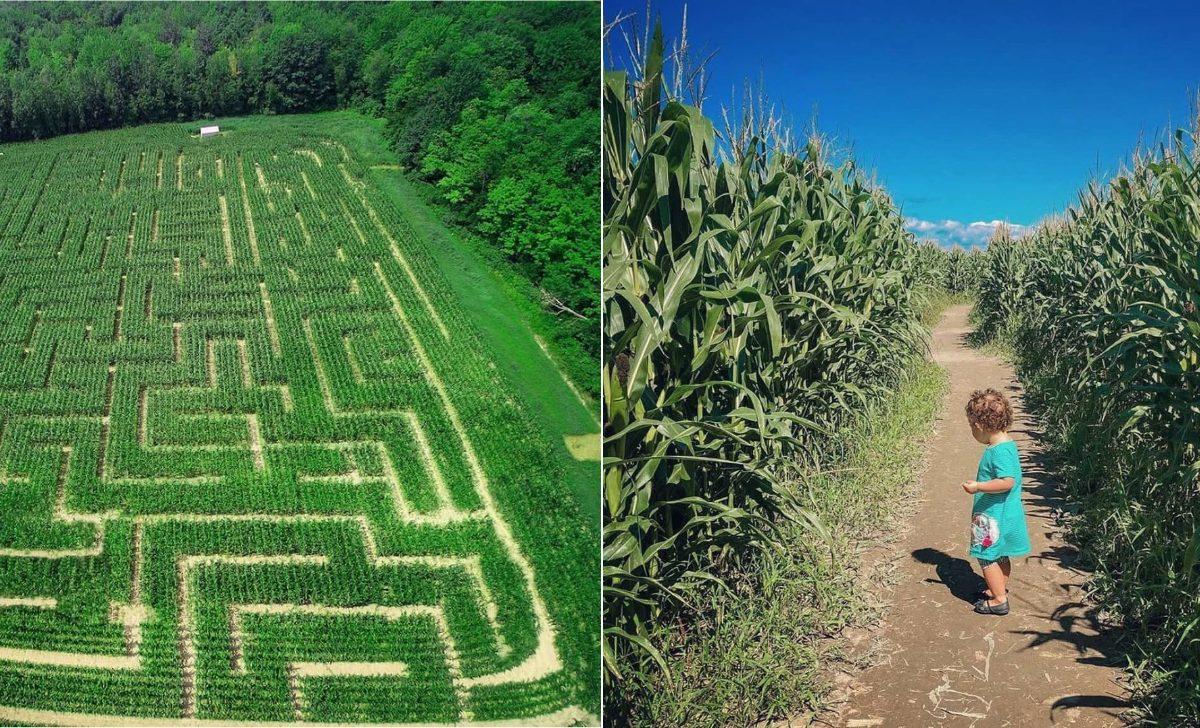 5 labyrinthes de maïs à visiter en famille